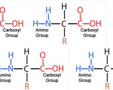 Common Amino Acids