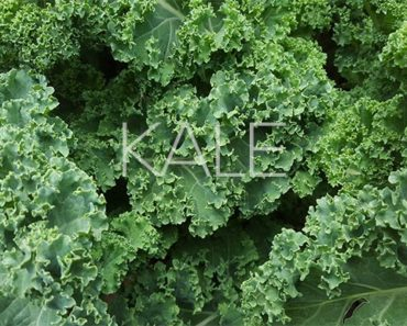 Kale Health Benefits