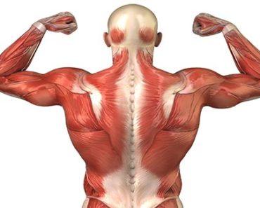 Muscle Vitamins