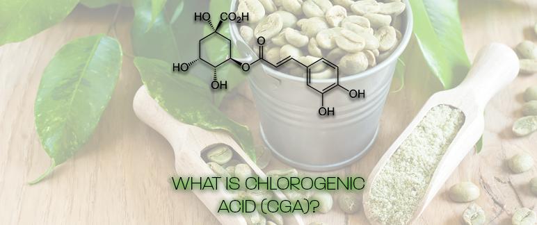 What Is Chlorogenic Acid?