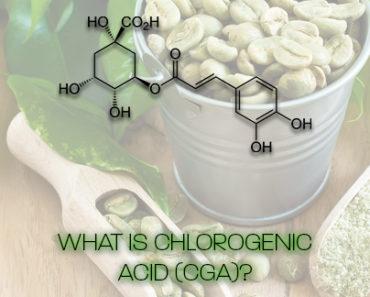 what is chlorogenic acid